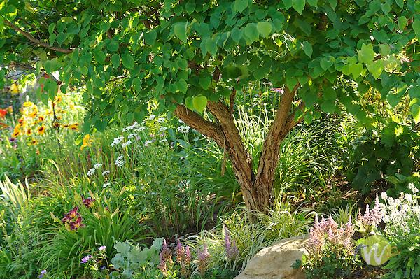 Pamela Paulhamus's Perennial flower garden in late June. Cogan Station, PA.
