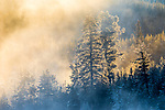 USA, Wyoming, Yellowstone National Park, sunlight shines through geyser mist rising above forest