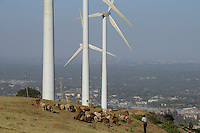 KENYA, Nairobi, Ngong Hills, 25,5 MW Wind Power Station with Vestas and Gamesa wind turbines, owned and operated by KENGEN Kenya Electricity Generating Company, shepherd with sheeps,  view to Nairobi / KENIA, Ngong Hills Windpark, Betreiber KenGen Kenya Electricity Generating Company mit Vestas und Gamesa Windkraftanlagen, junger Hirte mit Schafen, Blick nach Nairobi