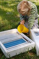 Kinder wollen Hühnereier in einer Brutmaschine ausbrüten, Hühnerei, Eier, Ei, Brutmaschine wird mit etwas Wasser befüllt