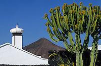 Europe/Espagne/Canaries/Lanzarote/Env de Teguise/Taro de Tahiche : Fondation César Manrique dans l'ancienne demeure de l'artiste - Le jardin