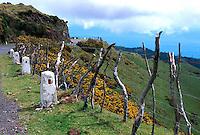 Portugal, Madeira, zentrales Hügelland im Westen
