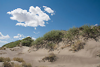 Sand dunes, Ash Meadows National Wildlife Refuge, Nevada