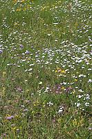 Trockenrasen, Magerrasen, artenreiche Blumenwiese u.a. mit Schafgarbe, Johanniskraut, Labkraut, Lauch
