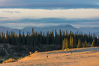 Hiking in the Great Kobuk Sand Dunes, Baird Mountains in the distance, Kobuk Valley National Park, Alaska.
