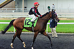 Reserved(12) with Jockey Justin Stein aboard after the Natalma Stakes at Woodbine Race Course in Toronto, Canada on September 13, 2014 with Jockey Patrick Husbands aboard.
