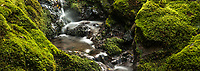 Close up of forest stream with green moss covered rocks, Egmont National Park, North Island, New Zealand, NZ