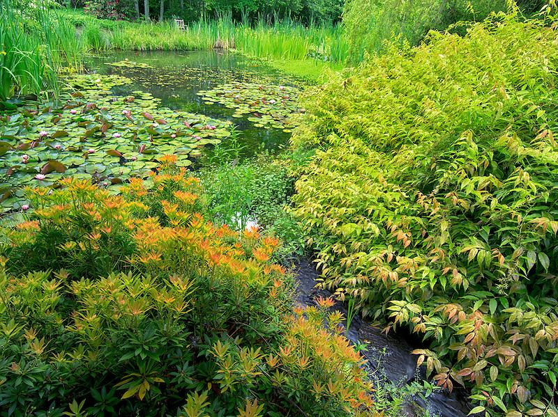 Pond at Hughes Water Gardens, Oregon