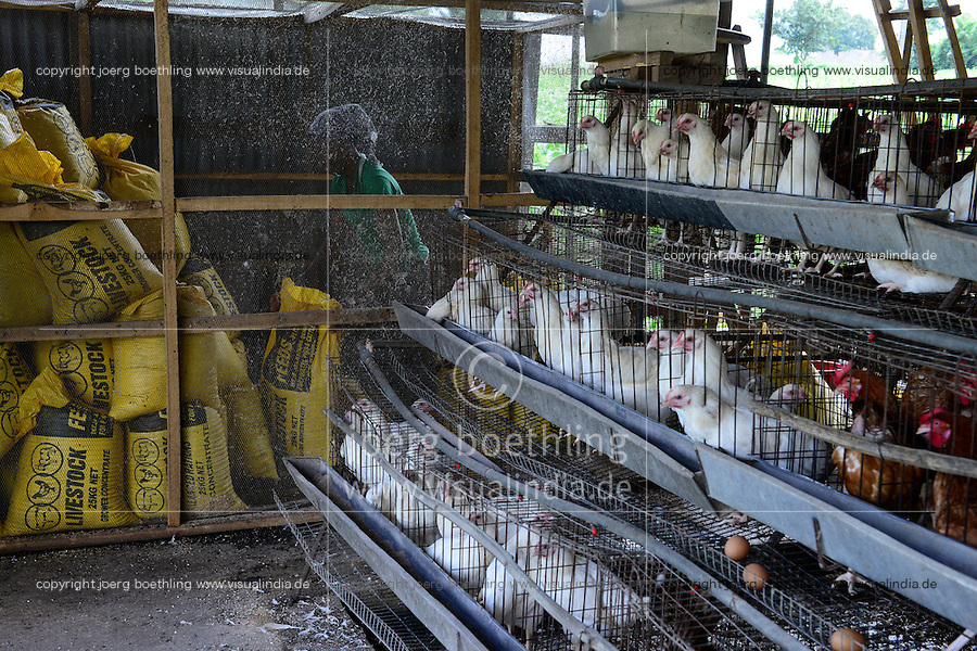 NIGERIA, Oyo State, Ibadan, village Ilora, chicken coop, breeding of broiler in cages, store for animal feeds / Zucht von Masthaehnchen in Kaefigen, Kraftfutter