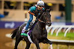 DEL MAR, CA - NOVEMBER 01:  Beach Patrol, owned by James Covello, Sheep Pond Partners & Head of Plains Partners LLC and trained by Chad C. Brown, exercises in preparation for Longines Breeders' Cup Turf at Del Mar Thoroughbred Club on November 01, 2017 in Del Mar, California. (Photo by Alex Evers/Eclipse Sportswire/Breeders Cup)