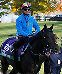 October 29, 2015: Golden Horn (GB), trained by John Gosden, and owned by Anthony Oppenheimer, is entered in the Breeder's Cup Longines Turf.  Candice Chavez/ESW/CSM