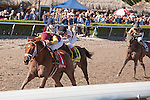 Sweet N Discreet goes on to win the Florida Sunshine Millions Distaff at Gulfstream Park, Hallandale Beach Florida. 01-18-2014