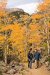 Couple hiking on trail through the golden colors of autumn in aspen stands above Bear Lake on a September morning in Rocky Mountain NP, Colorado