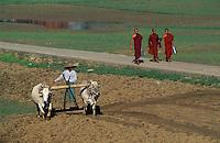 Asie/Birmanie/Myanmar/Haute Birmanie/Mandalay/Amarapura: Le long de la route du port, travaux des champs - Attelages de buffles et moines