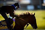 November 4, 2020: Maximum Security, trained by trainer Bob Baffert, exercises in preparation for the Breeders' Cup Classic at at Keeneland Racetrack in Lexington, Kentucky on November 4, 2020. Alex Evers/Eclipse Sportswire/Breeders Cup
