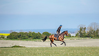 YARD VISIT: Sir Mark Todd (NZB CAMPINO) THE LEAD UP TO 2014 GBR-Mitsubishi Motors Badminton CCI4* (Saturday 3 May) CREDIT: Libby Law COPYRIGHT: LIBBY LAW PHOTOGRAPHY - NZL