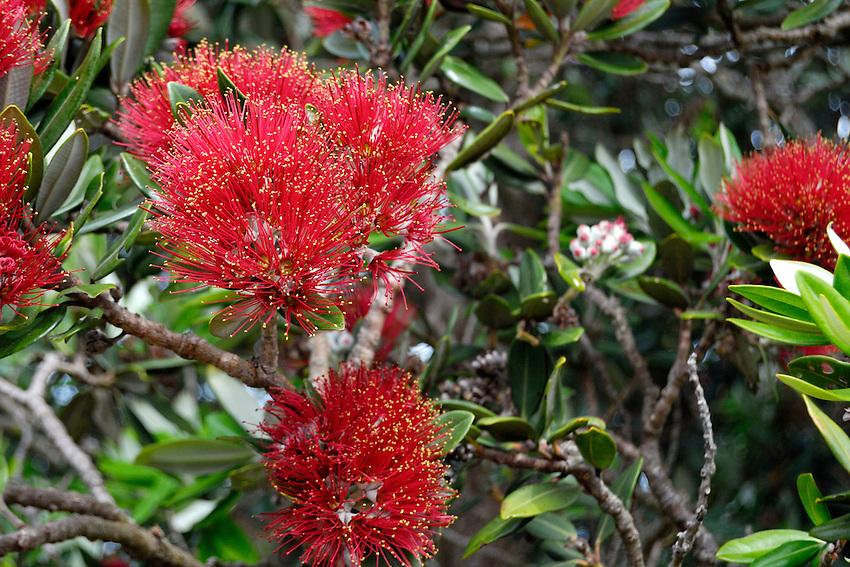 Xmas Bush - Auckland Island, NZ