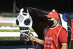 March 27 2021: TITLE READY #14, in the post parade for the Dubai World Cup at Meydan Racecourse, Dubai, UAE. Shamela Hanley/Eclipse Sportswire/CSM