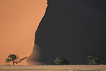Trees against the backdrop of a sand dune in Sossusvlei, Namibia.