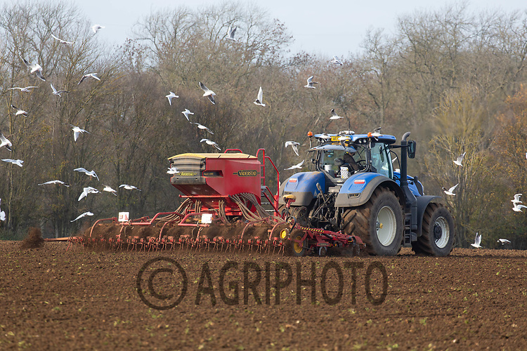 24/11/2020 Drilling Winter wheat following sugar beet<br /> ©Tim Scrivener Photographer 07850 303986<br />      ....Covering Agriculture In The UK....