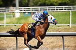 Amarish with Edgar Maldenado aboard wins the Willard L. Proctor Stakes at Betfair Hollywood Park in Inglewood, California on June 16, 2012.