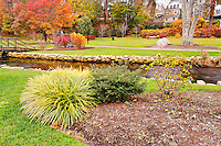 The Brewster Gardens in Plymouth on a gloomy day in fall. Partial view of the Garden with plants and the creek