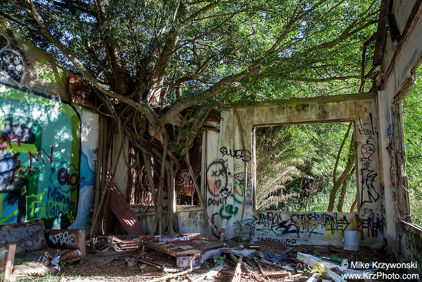 Ruins of a building associated with the old Waiale'e Industrial School For Boys, North Shore, O'ahu