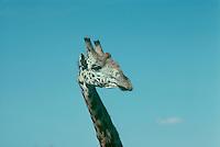 Giraffe in sky, Kenya Africa