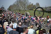 Peloton cornering on the Haaghoek cobbles <br /> <br /> <br /> 103rd Ronde van Vlaanderen 2019<br /> One day race from Antwerp to Oudenaarde (BEL/270km)<br /> <br /> ©kramon