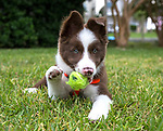 Piper plays with a ball in the yard.