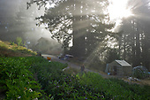 Scotts Valley, California<br /> August 1, 2014<br /> <br /> Kelly Bradford, farmer and owner of Old House Farm, harvesting.