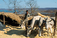 INDIA Madhya Pradesh Bargi, tribal farmer near reservoir of Bargi dam at Narmada river, many farmer have lost their arable land and fight for rehabilitation until today / INDIEN, Adivasi Farmer am Stausee des Bargi Staudamm am Narmada Fluss, viele Ureinwohner haben ihr Land verloren