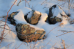 Garden of Rocks and Snow Bathed in Warm Early Morning Sunlight