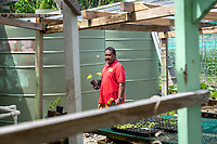 A man purchases plants from a farm jointly run by the Tuvalu and Taiwanese governments. The farm is part of a program of assistance provided by Taiwan. Tuvalu has poor quality soil throughout its islands and atolls resulting in few vegetables and fruits being available for local to eat. The farm sells vegetables to locals twice a week. Located in the South West Pacific Ocean, Tuvalu is the world's 4th smallest country and is one of the most vulnerable to climate change impacts including sea level rise, drought and extreme weather events. Tuvalu - March, 2019.
