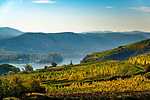 Oesterreich, Niederoesterreich, Kulturlandschaft Wachau - UNESCO Weltkultur- und -naturerbe: Weinanbau entlang der Domau | Austria, Lower Austria, Wachau Cultural Landscape - UNESCO World's Cultural and Natural Heritage: winegrowing alongside river Danube