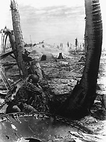 Taking the slim protection that a blasted three affords, this Marine picks-off the Japs in a pill box.  A Jap in a pill box must be shot through the small opening he uses to sight through, but that didn't bother this Marine on Tarawa.  November 1943. (Marine Corps)<br /> Exact Date Shot Unknown<br /> NARA FILE #:  127-N-63472<br /> WAR & CONFLICT BOOK #:  1183