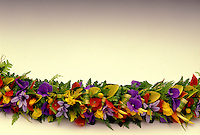 Colorful haku flower  lei on white backround