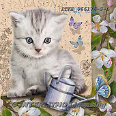 Isabella, REALISTIC ANIMALS, REALISTISCHE TIERE, ANIMALES REALISTICOS, paintings+++++,ITKE066176-S-L,#a#, EVERYDAY ,cats ,collage