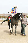 2011 03 05: Heavy favorite Calibrachoa,  with Ramon Dominguez up, return from winning the Grade 3 Tom Fool Stakes, for 3-year olds & up, at 6 furlongs, on the inner dirt track, Aqueduct Racetrack, Jamaica, NY. Trainer Todd Pletcher. Owner Repole Stables