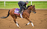 October 26, 2015 :  Ivan Fallunovalot, trained by W.T. Howard and owned by Lewis Mathews Jr., exercises in preparation for the Breeders' Cup Sprint at Keeneland Race Track in Lexington, Kentucky on October 26, 2015. Scott Serio/ESW/CSM