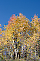 Fall Color New Mexico