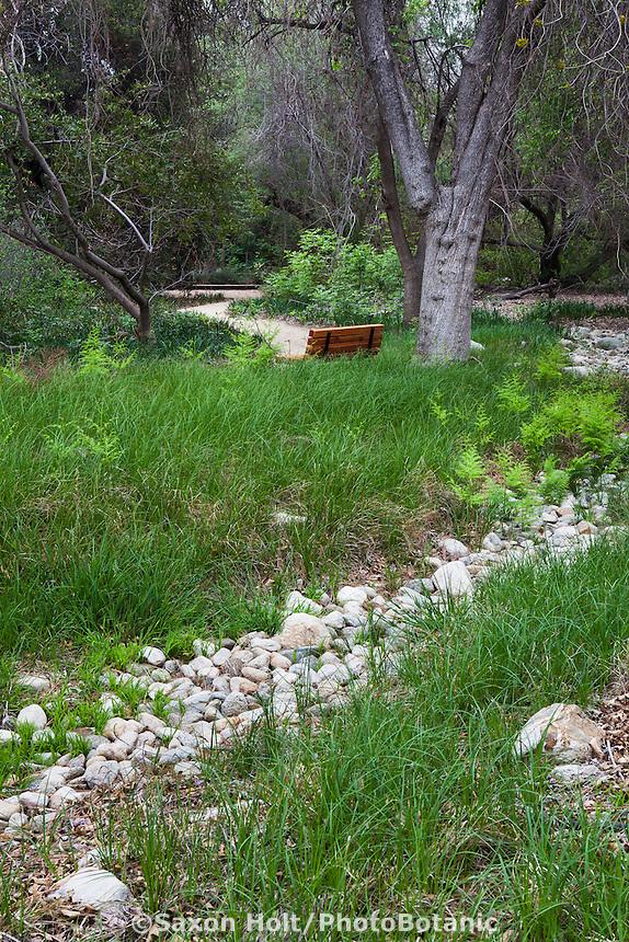 Dry stream through meadow of Carex pellita Wooly Sedge, California native lawn substitute, Rancho Santa Ana Botanic Garden