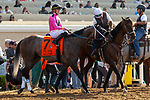 """DEL MAR, CA  AUGUST 18: #7 Multiplier, ridden by Tyler Gaffalione, in the post parade of the Del Mar Handicap by The Japan Racing Association (Grade ll), Breeders' Cup """"Win and You're In Turf Division"""", on August 18, 2018 at Del Mar Thoroughbred Club in Del Mar, CA.(Photo by Casey Phillips/Eclipse Sportswire/Getty Images"""