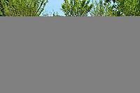 Paris accueille BiodiversiTerre, une oeuvre vegetale et humaine de 10 000 m² realisee par l'artiste Gad Weil, promenade agricole et horticole sur l'avenue Foch, entierement pietonne - 05 juin 2017 - Paris - France
