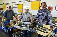 Europe/France/Bretagne/29/Finistère/  Poulgoazec:  la criée de Poulgoazec environs  d'Audierne trois pêcheurs retraités font visiter la criée aux estivants