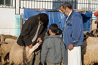 Tripoli, Libya - Eid al-Adha, Id al-Adha.  Checking teeth before buying a sheep for the annual feast when Muslims commemorate God's mercy in allowing Abraham to sacrifice a ram instead of his son, to prove his faith.