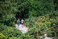 BNPS.co.uk (01202 558833)<br /> Pic: MaxWillcock/BNPS<br /> <br /> Pictured: Walkers near Studland Bay in Dorset.<br /> <br /> Cows have been reintroduced to a beauty spot for the first time in 90 years in a bid to save its threatened sand dune habitats.<br /> <br /> A herd of ten Red Devon grazing cattle are being used to trample down overgrown vegetation and boost biodiversity at Studland Bay, Dorset.<br /> <br /> The roaming animals, which are wearing GPS smart collars, are being monitored daily by National Trust livestock managers and will graze on dense areas of shrub away from Britain's most popular naturist beach.