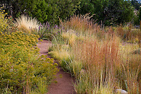 Path through drought tolerant New Mexico meadow garden with Little Bluestem grass (Schizachyrium scoparium) and Dwarf Goldenrod (Solidago spathulata) and Juniper hedge (Juniperus monosperma). design by Judith Phillips.