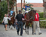 HALLANDALE BEACH, FL - FEBRUARY 06:     Lukes Alley #1 with Paco Lopez going to the post parade in the 34th running of the Gulfstream Park Turf Handicap G1 on Donn Handicap Day  at Gulfstream Park on February 06, 2016 in Hallandale Beach, Florida. (Photo by Liz Lamont)