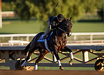 OCT 29: Breeders' Cup Juvenile  entrant Wrecking Crew, trained by Peter Miller, at Santa Anita Park in Arcadia, California on Oct 29, 2019. Evers/Eclipse Sportswire/Breeders' Cup